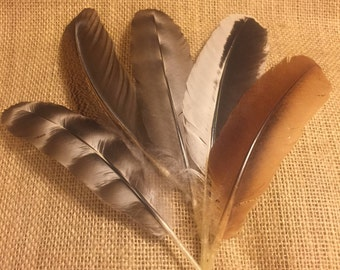 5+ Large Cruelty-Free Chicken Feathers