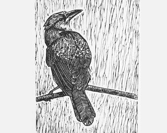Blue Jay Linocut, Ink Bird Print