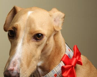 Martingale, Buckle, Limited Slip, Dog Collar / Cubes / Bow/  Sighthound Collar / Training Collar