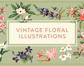 Vintage Flower Illustrations (Digital)