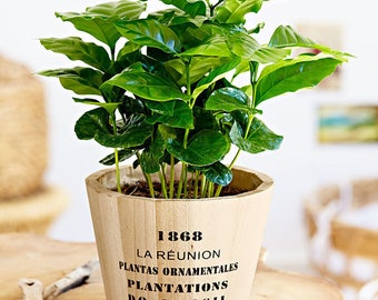 Coffee Plant Etsy