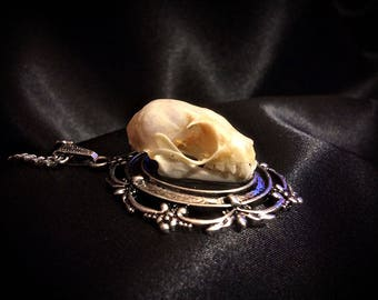 Bat Skull Necklace - Taxidermy Bat Necklace - Real Bat Jewelry - Gothic Necklace - Gothic Jewelry - Gothic Gift - Oddities - Curiosities
