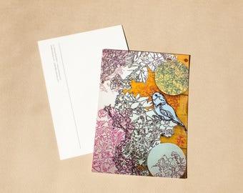 Pattern Bird Postcard - Bird Postcard - Stationery - Paper Goods - Nature and Wildlife - Illustrated Postcard