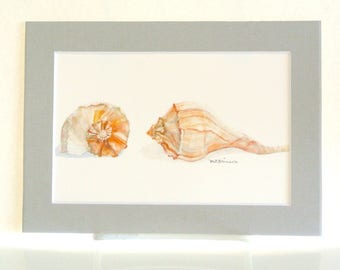 Sea shell art watercolor print, sea shell giclee print, whelk conch painting print, beach cottage home decor, 5x7 GRAY matte, gift under 20