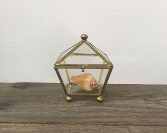 Vintage geometric shaped glass and brass display curio box with real shell