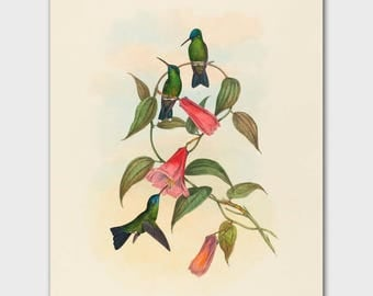 Hummingbird Wall Art (Living Room Wall Decor, Bedroom Print) John Gould Botanical Bird Art