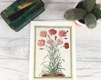 Pink flowers print, antique botanical, botanical art, vintage botanical, flower print, nature print, botanical wall art, dorm decor plant