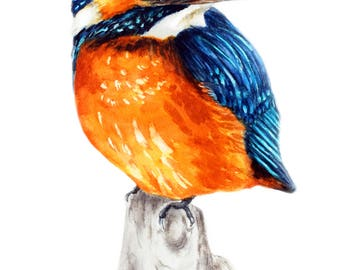 Kingfisher, Art print, bird painting, kingfisher print, watercolour bird painting