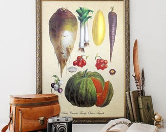 Botanical Art Print Vegetable Giclee Kitchen Decor Vintage Vegetable Art Decorative Root Vegetable Reproduction Veggie Wall Art VF019