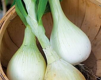 "VRCO)~""AILSA CRAIG Exhibition"" Onion~Seed!!~~~~~The Big Boy!"