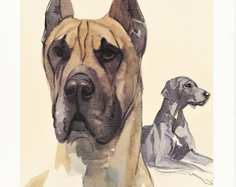 Great Dane giant large German dog breed vintage print illustration gift for dog lover owner portrait by Willy E. Bär 8x11.5 in