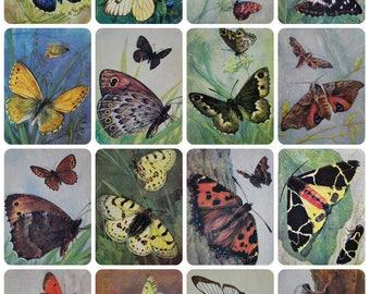 Butterflies - Artist L. Aristov - Set of 16 Vintage Soviet Postcards, 1975. Moths Insects Entomology Natural History Art Print