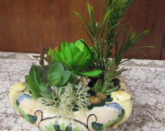 Majolica ware with Succulents