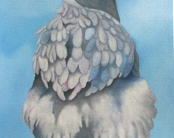 """blue orpington chicken painting """"Florence"""""""