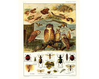 1922 Beneficial animals & insects print, Antique illustration, identification chart, ladybird, owl, bats, tods, frogs