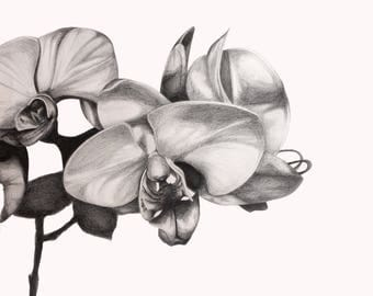 Orchid Drawing Print