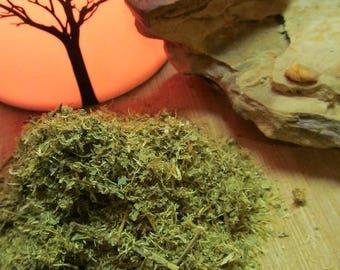 Mexican Dream Herb, Calea Zacatechichi