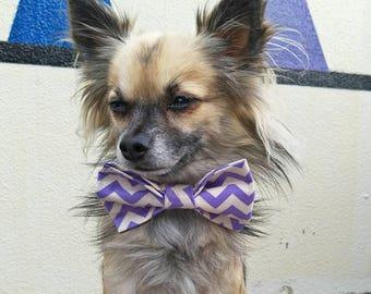 Purple Chevron Bow Tie, Dog Bow Tie, Pet Bow Tie, Dog Tie, Dog Neckwear, Dog Collar Tie, Pet Photo Prop, Photo Prop,  Slide on Collar Bow