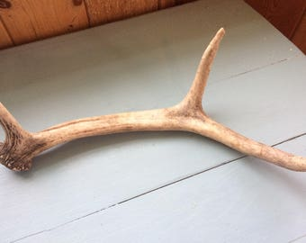 Naturally Shed Ell Antler, Small Three Point
