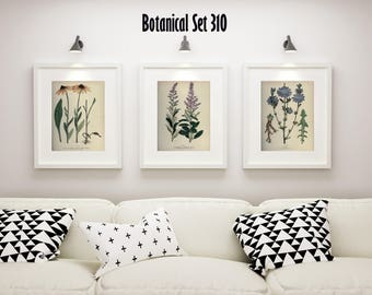 Botanical Print Set of 3, Wildflower Wall Art, Antique Botanical Wall Art, Wildflower Prints, Modern Farmhouse Decor, Housewarming Gift