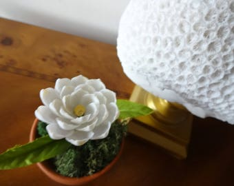 Seashell flower, potted plant, potted shell flower, party favors, interior design, wedding gift