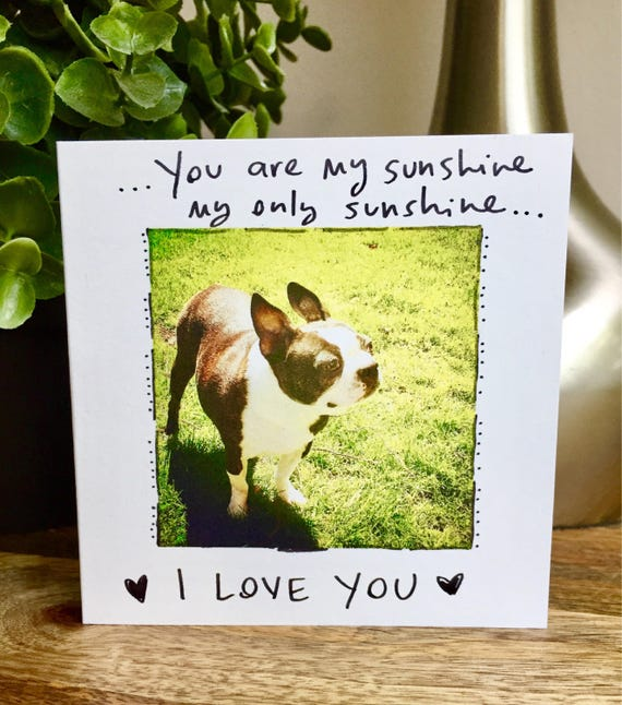 You Are My Sunshine, Boston Terrier, Friendship Card, Love Card, Sunshine, Sidesandwich, You Are My Person Card, Sidesandwich, love card