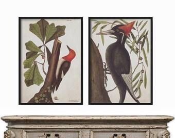 Wall Art Prints - Prints - Home Decor - Vintage Bird Print Set of 2 - Print Set of 2 Birds - Birds Print Set - Vintage Bird Illustration