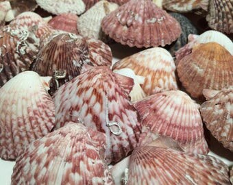 SALE!!!!, Craft Shells, Shells, Beach,ocean, Home