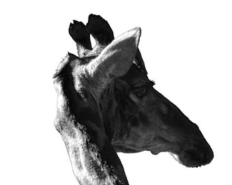 Instant Printable Giraffe Safari Photography Download