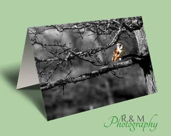 Owl Card - barn owl - owl photo blank greeting card - owl - personalised card - personalized card - any occasion card - greetings card