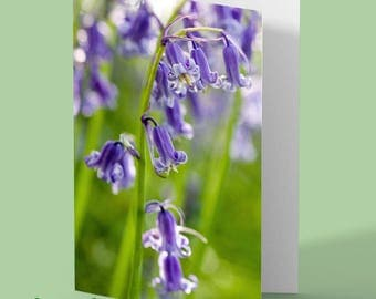 bluebell greeting card - bluebells - bluebell photo - greetings card - any occasion card - flower card - floral card - blank card