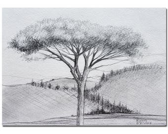Umbrella Pine Tree, Original Graphite Pencil Drawing on Watercolor Paper, Black and White Pine Tree by Tatjana Original Art Fathers Day Gift