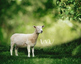 Beautiful Forest/Sheep/Fantasy/ Digital Background