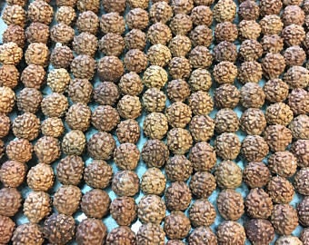 10mm 105-110 Pure Natural Untreated Rudraksha Beads, Rudraksha Mala Beads, Rudraksha Seed Beads, Upolished Rudraksha ,38-40 Inches long.