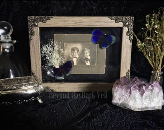 Victorian Cabinet Card Butterfly Shadow Box, Butterfly Taxidermy, Taxidermy Art, Real Butterfly, Framed Butterfly, Moubted Butterfly, Gothic