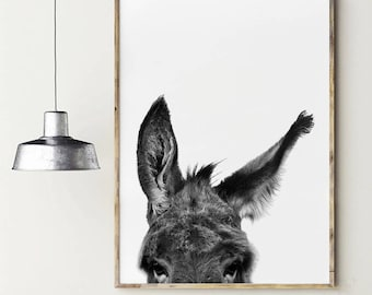 Donkey poster. Donkey's ears. Animals poster. Animal photography. Nature poster. Instant download