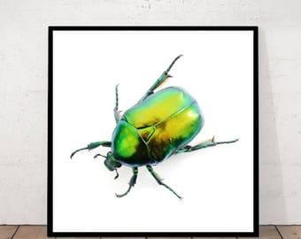 Green Beetle, Scarab Print, Beetle Photography, Beetle Print, Scarabee Decor, Insect Print, Insect Decor