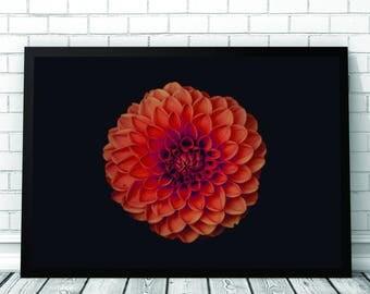 Orange Flower Art Print, Flower, Flower Art, Flower Print, Botantical Art, Printable Digital Download, Photography