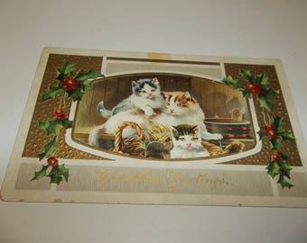 Vintage Kittens In Basket Postcard