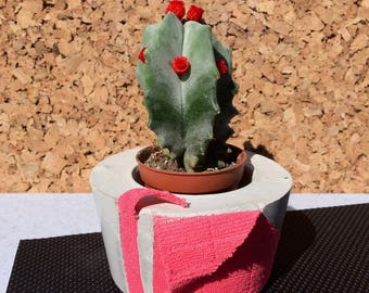 Pink Concrete Pot