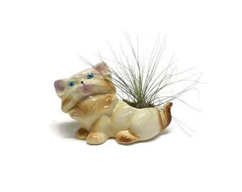 Vintage Cat Planter - Air Plant in Cat Planter - Vintage Planter with Tillandsia - Cat Air Plant Holder - Air Plant Holder - Vintage Cats
