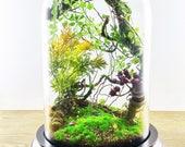 Artificial plants forest terrarium, Cabinet of curiosities, dome Bell glass, birthday gift wedding, Garden decor