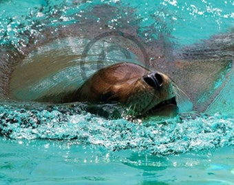Seal Play ( relaxed swimming) instant download