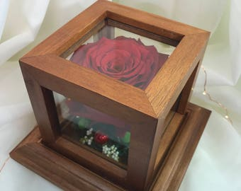 Pink in wooden box