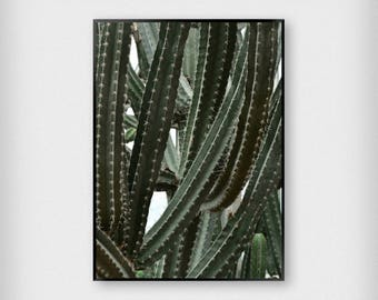 Cactus Print | Botanical | Green | Photography - Succulent - Poster