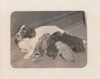 Vintage Photo Cute Adorable Dog Nursing Puppies Animal Photography Black & White Ephemera Snapshot Antique Pets Decorations