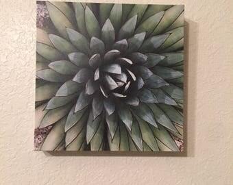 Agave 8x8 Canvas