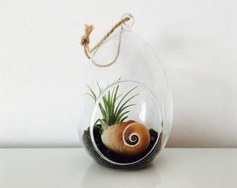 Plant terrarium kit - air - air plant - terrarium