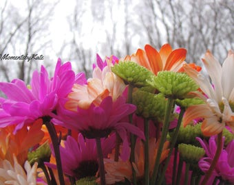 Bright Flowers Against Winter Trees
