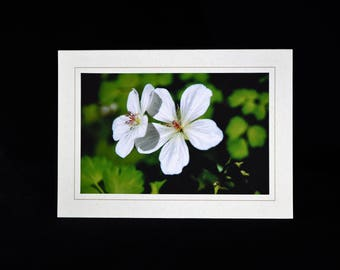White Floral Note Card